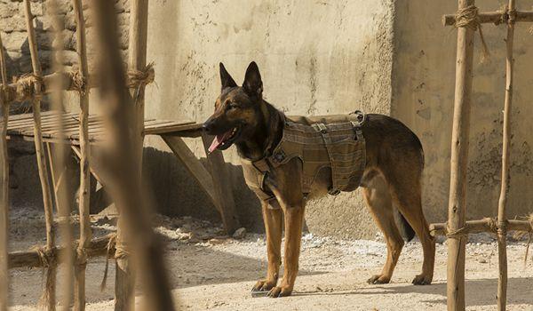 Resultado de imagem para Max - O cão herói