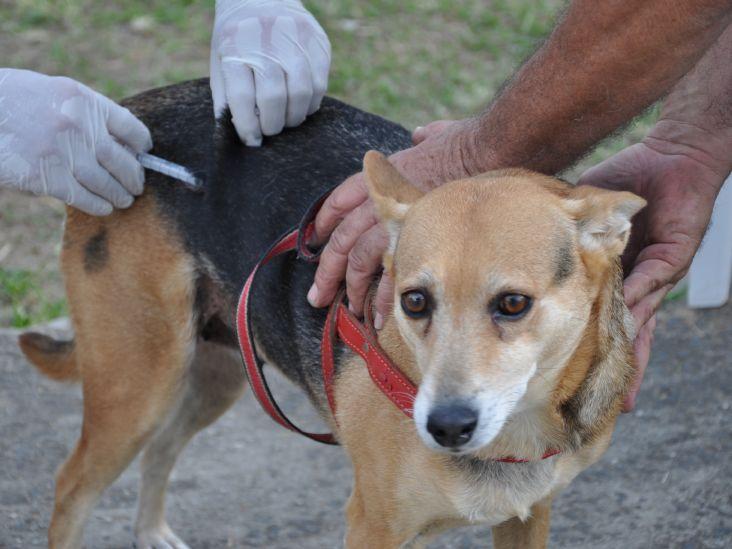 Campanha antirrábica na zona rural de Limeira já vacinou 506 animais